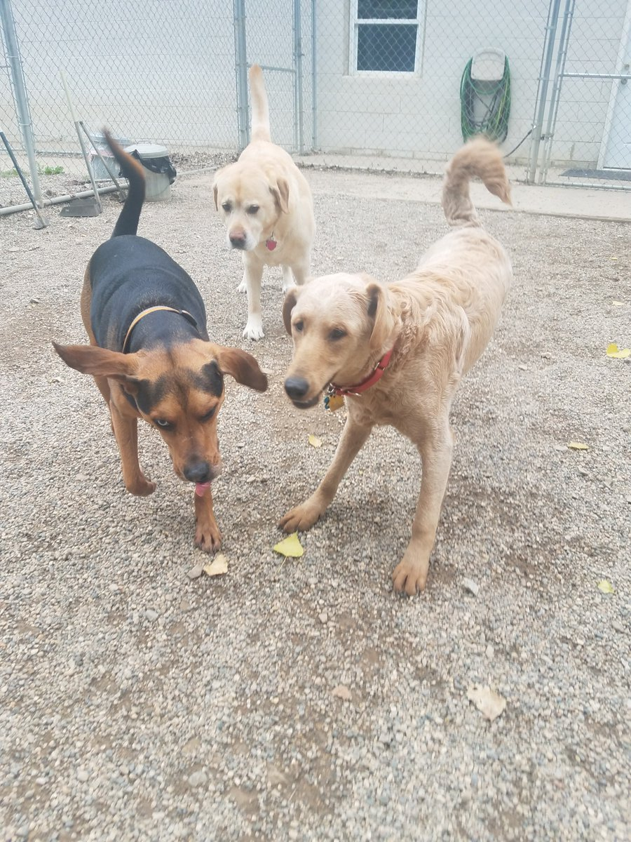 Diesel, Leeloo, and Cooper have some fun!