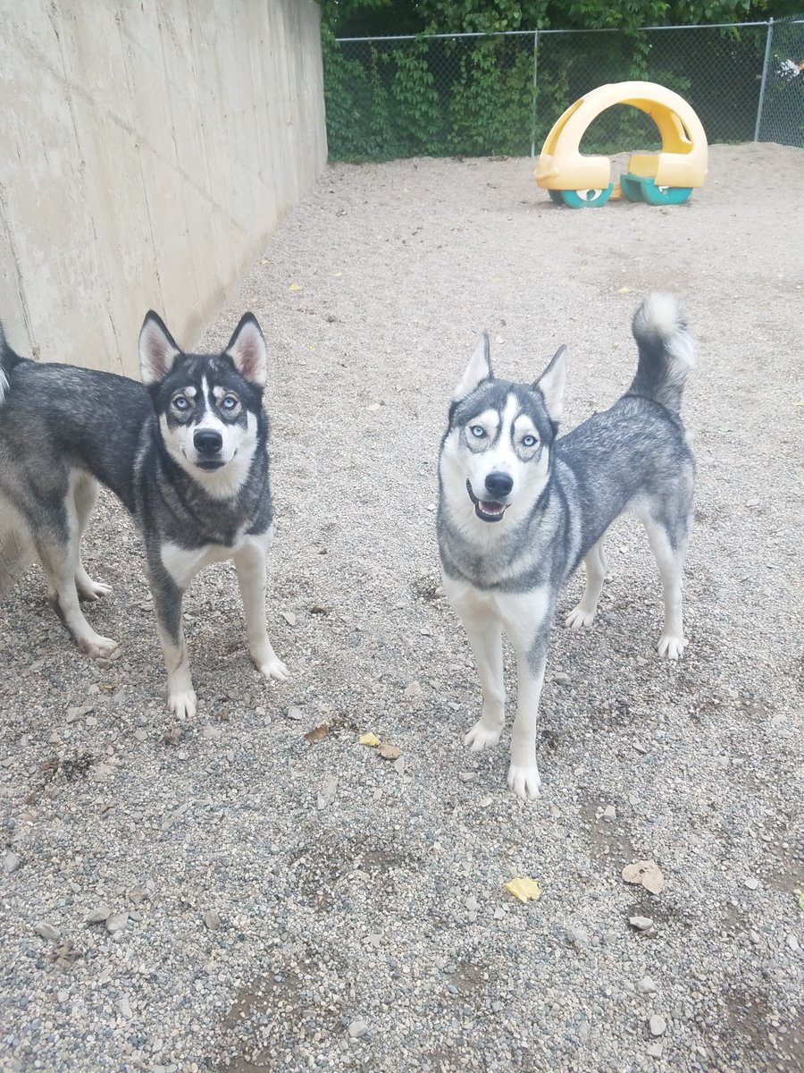 Arya and Lyka pose for a picture!