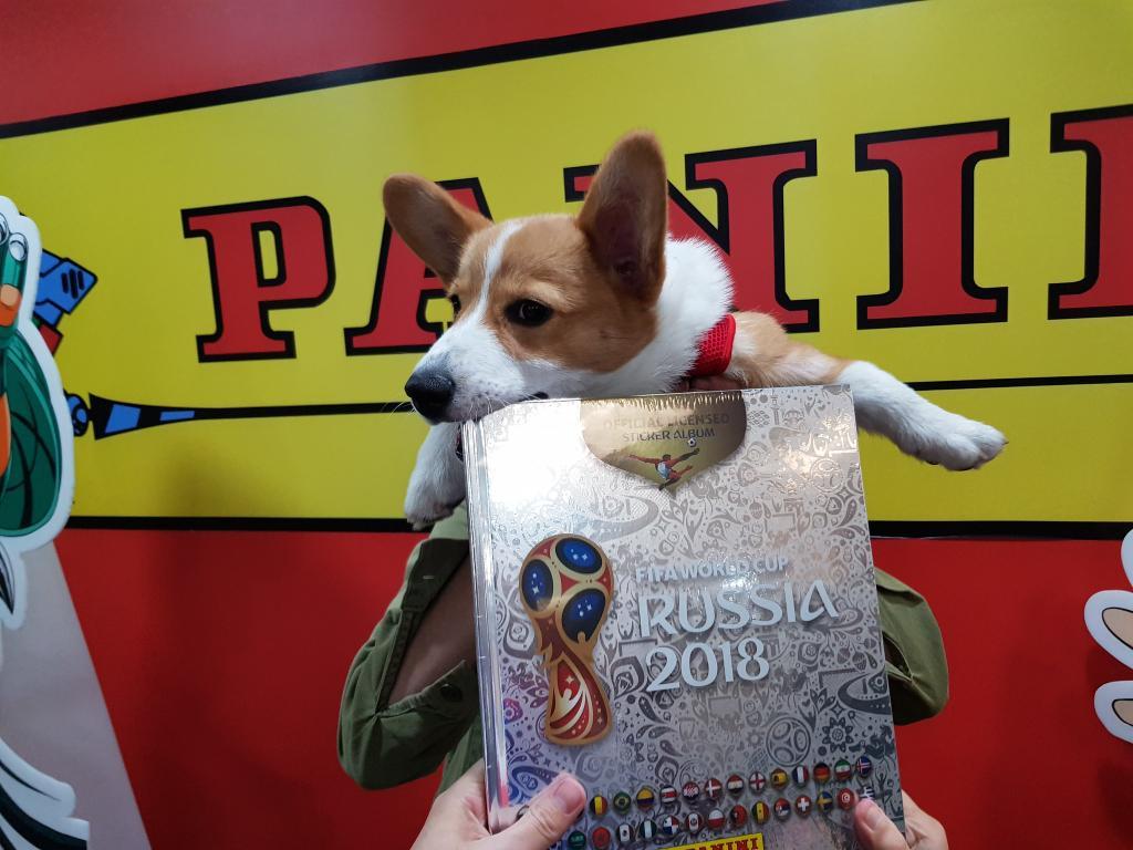 Il cane le mangia l'album di figurine dei mondiali. La Panini gliene regala uno nuovo - https://t.co/H2B8HvEDBi #blogsicilianotizie #todaysport