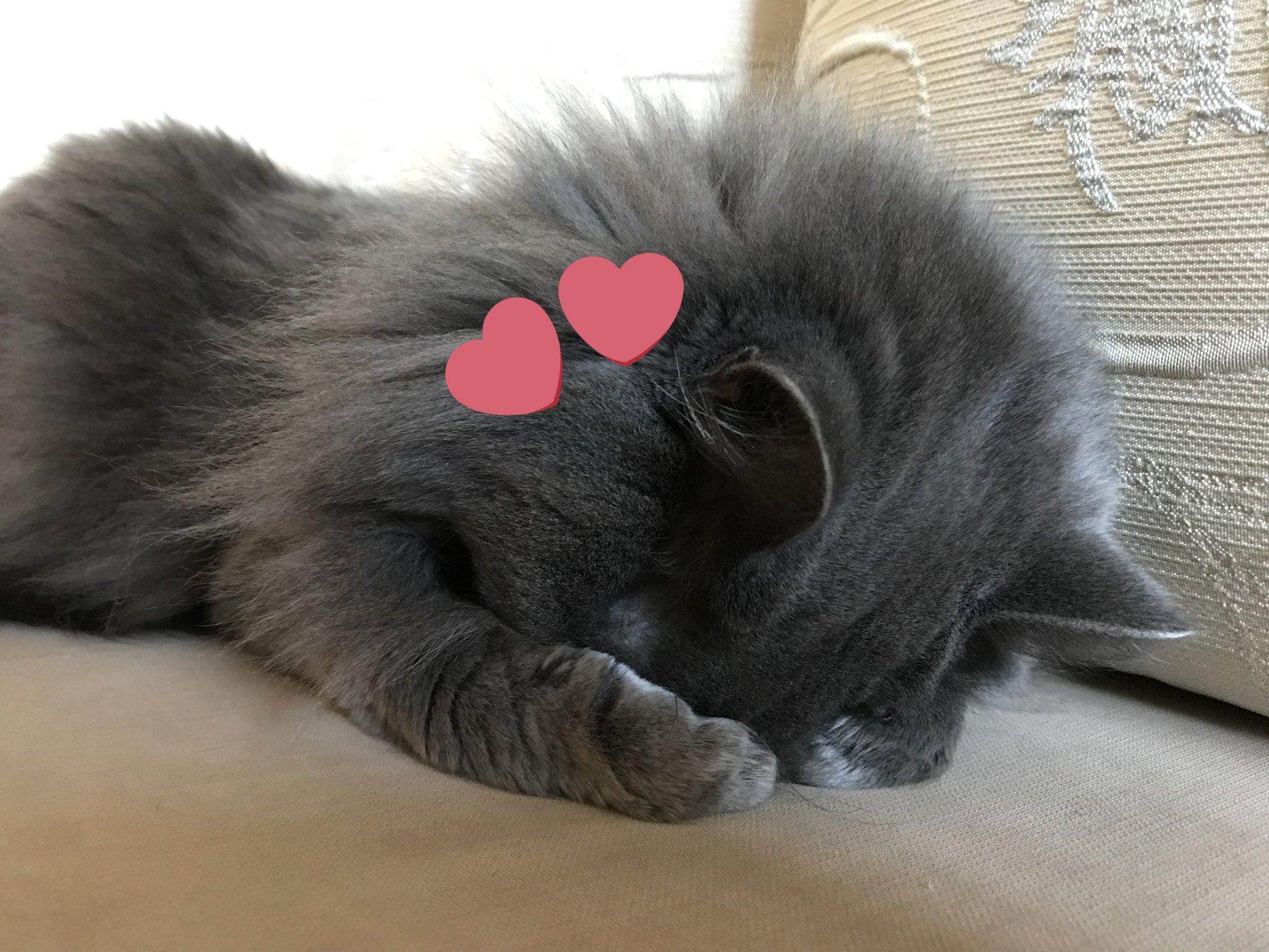 картинки любимому от котенка вот факт