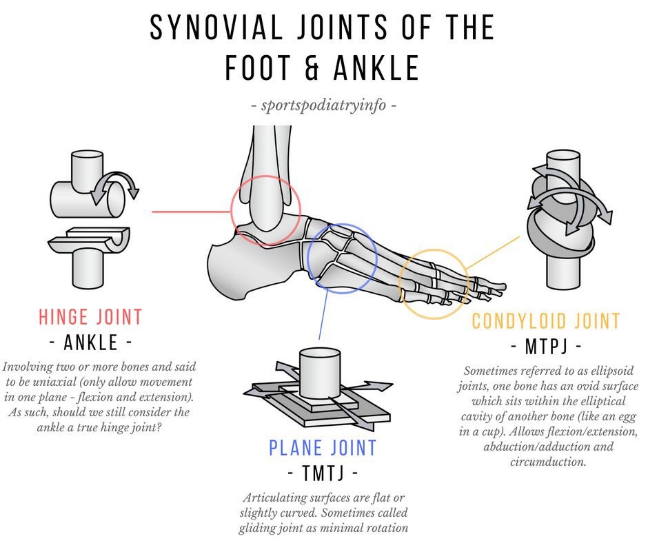 Sports Podiatrist On Twitter In Synovial Joints Opposing Bony