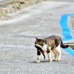 コレが本当のお魚くわえたどら猫リアルどら猫が可愛すぎる!