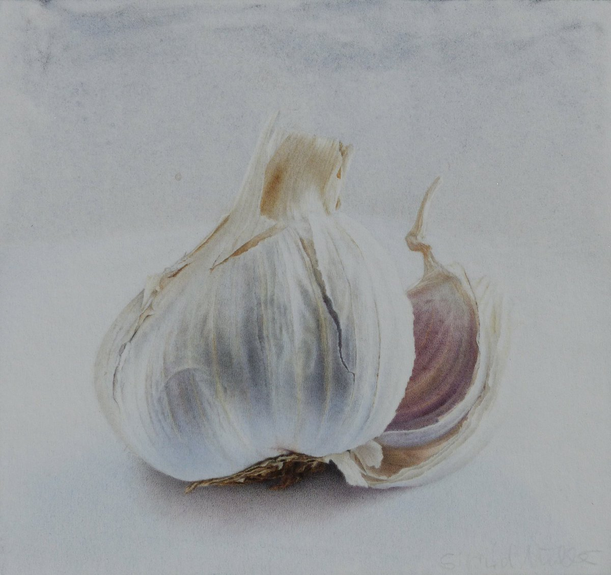 Sigrid muller on twitter garlic drawing with pencil crayon and