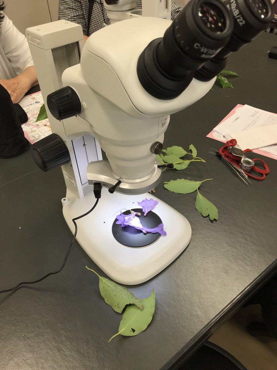 本日の長居植物園案内はあいにくの雨だったので室内で実施。顕微鏡とか板書とか普段使わないものを使ってじっくりめに観察しました。