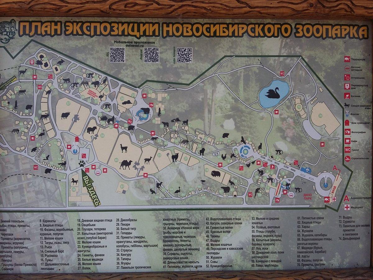 План зоопарка картинки