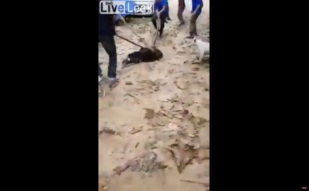 Watch: Thai men scramble to save dog being strangled by huge python nst.com.my/world/2018/06/…