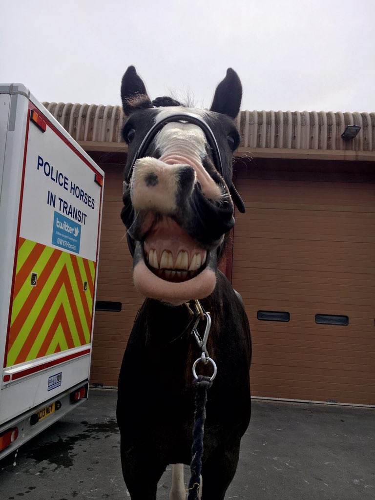 PH Seth with a great smile after a good day in Leeds keeping everybody safe #smile<br>http://pic.twitter.com/iCWWCx6FOu