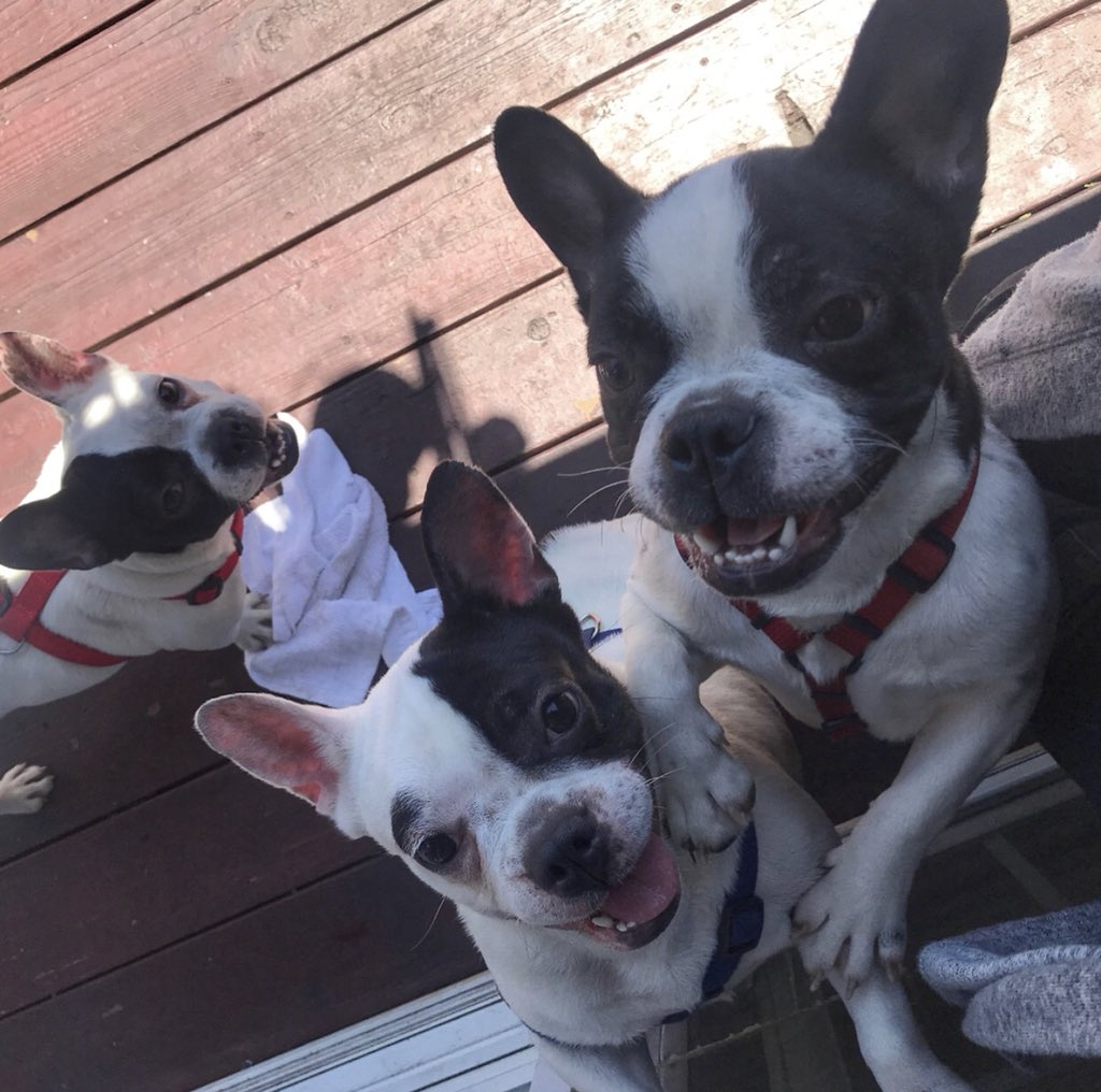 Look at these faces!  From a slaughterhouse in China to all smiles in the US. Their smiles are a perfect representation of our gratitude to everyone that follows and supports Road Dogs. Couldn't do it without you!  <br>http://pic.twitter.com/nccC1ThX1l
