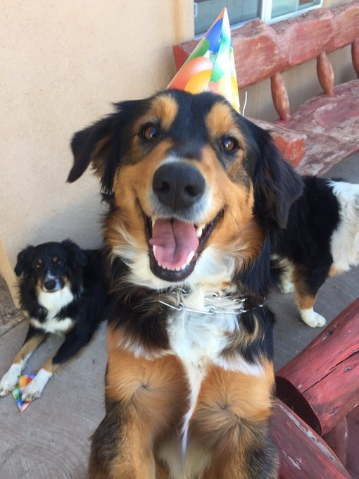 my dogs have gone missing :( ( Del Valle/ Valley View area) pls contact me if you've seen them (reward will be given )  • all Australian Shepherds  •2 male, 1 female  • will respond to Mika, Rocky &amp; Maximus <br>http://pic.twitter.com/bnxi8ykfth