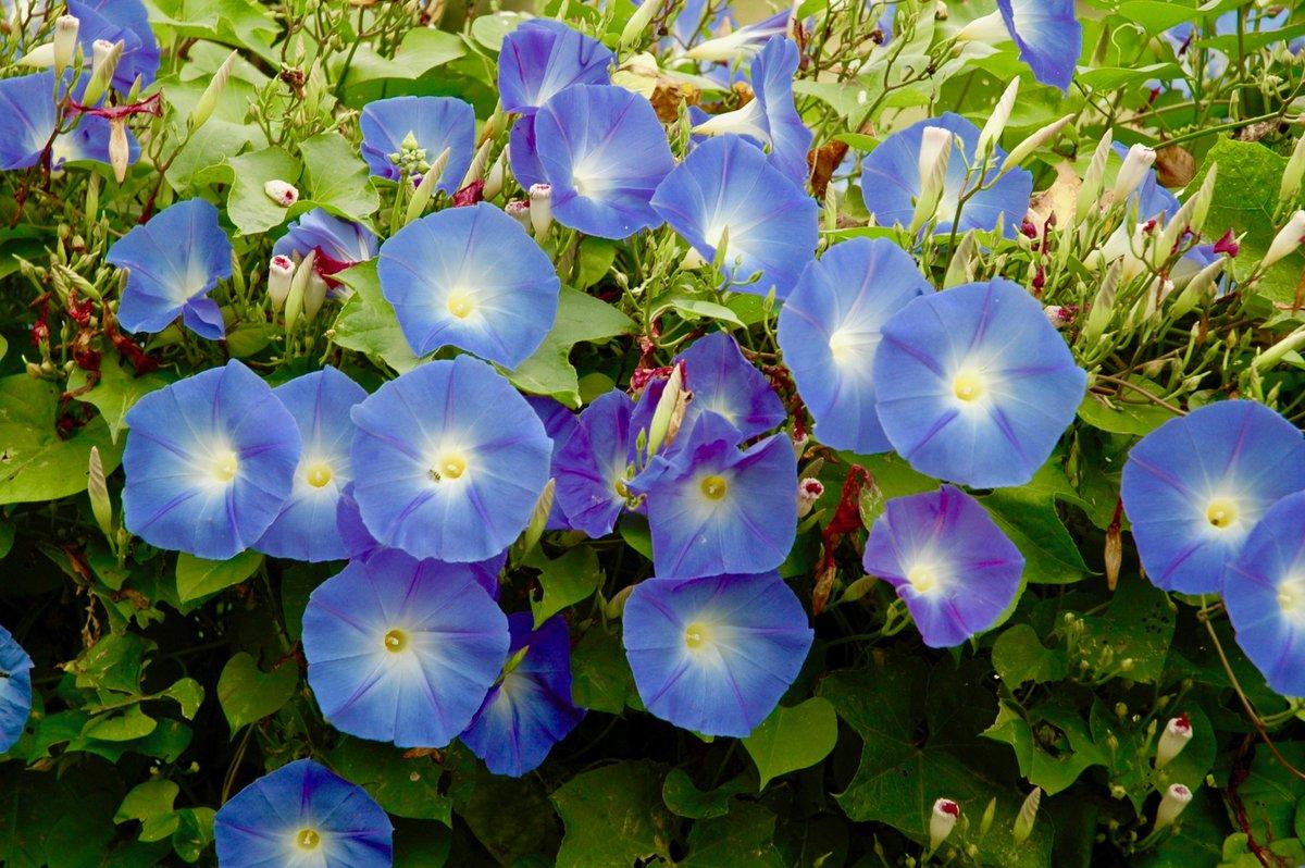 Blueflowers Hashtag On Twitter