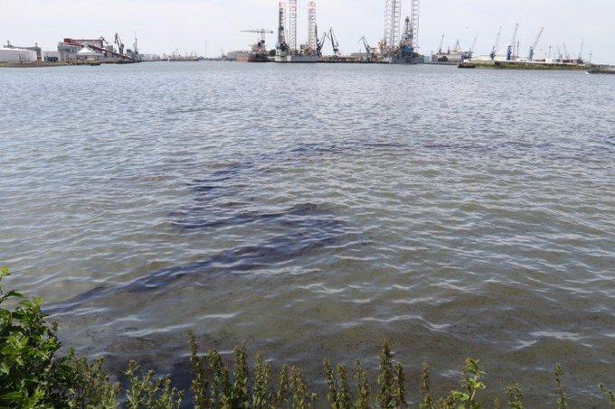 Alarmfase afgekondigd voor vervuilde watervogels Nieuwe Waterweg https://t.co/ya1gvm59Mk https://t.co/VBiVAjZl9q