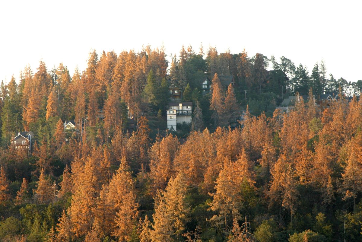 California is leading the way on climate change by protecting forests that soak up carbon dioxide https://t.co/mP48Ck4jaP