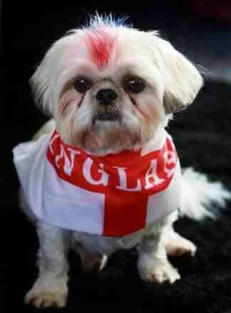 Joanne sent us this adorable picture of Charlie all set for the football #CutenessOverload #WorldCup2018 #WorldCup <br>http://pic.twitter.com/D8Hr8lsUsn