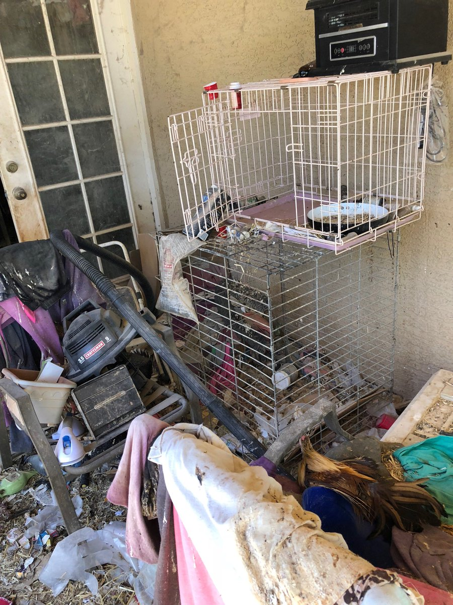 Dozens of animals found in unsanitary living conditions in Gilbert home VIDEO: https://t.co/ZDPRYudrKv