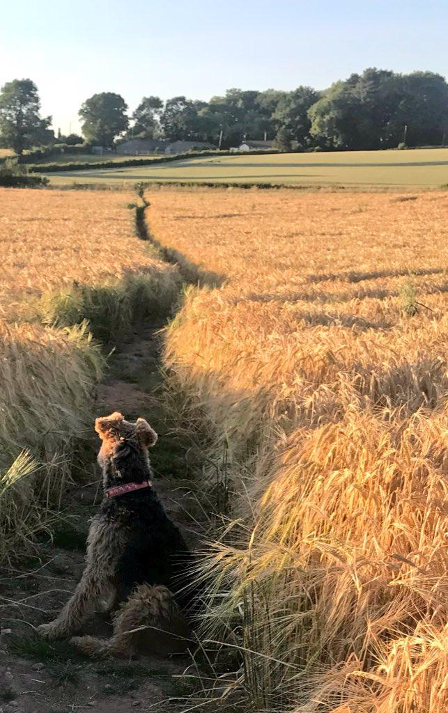 Evening walk #waitformeee #arewenearlythereyet 🐾😍 #Staffordshire