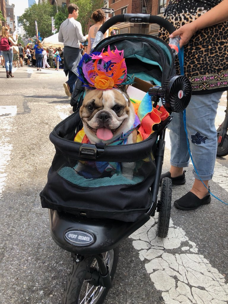 ������ Here's to the very good dogs of #NYCPride https://t.co/iQ6zyruhaW