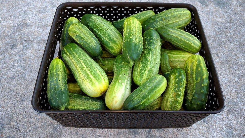 Kind of a big dill: Boston hosts 2nd annual pickle fair https://t.co/HTQ3slCcRw