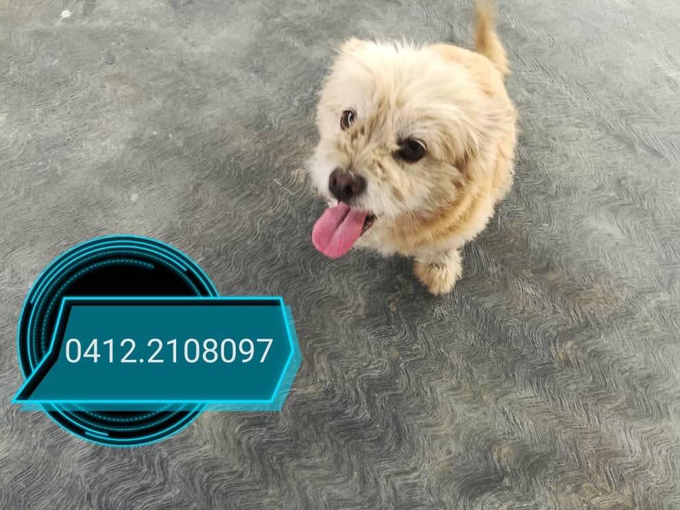 #ServicioPublico #Caracas Buscando ayuda para conseguirle hogar a esta perrita rescatada. Info de contacto en fotos