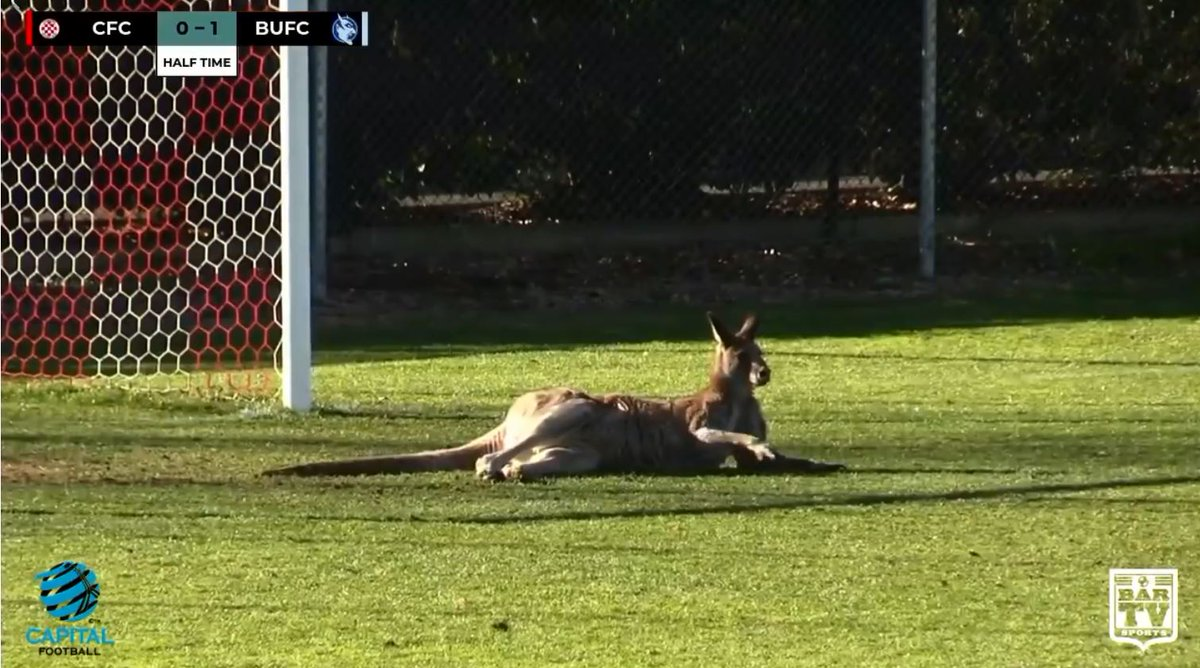 &#39;Soccer-roo&#39; makes social media splash after disrupting #Canberra match  https:// ab.co/2KewaUm  &nbsp;   : @BarTVsports<br>http://pic.twitter.com/O7hGVawfus