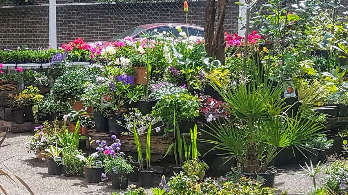 Shanks Pony Gardener On Twitter Spring Gardens Nursery Heatwave Opening Times 4 30pm Till 8pm Weds To Sunday All This Week Keep Eye Out For Updates