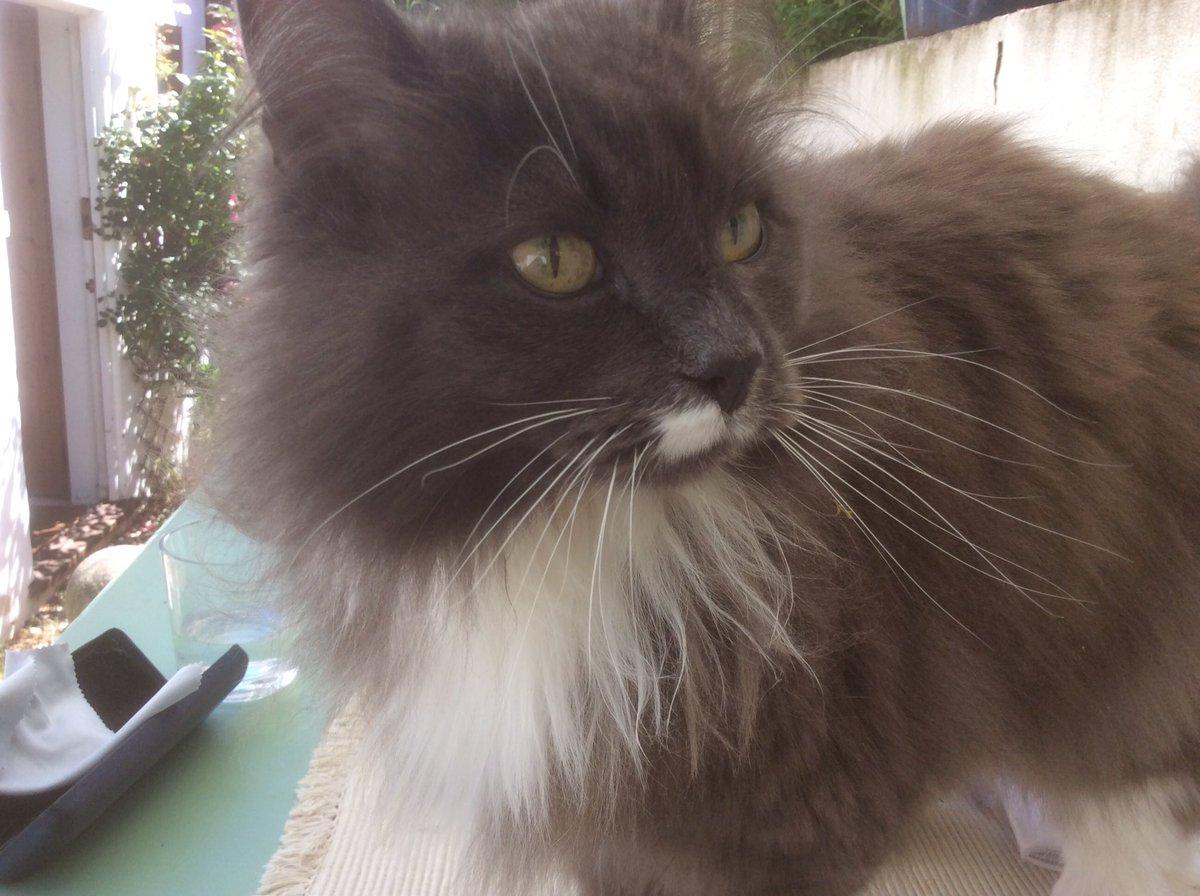 マギーさんちで仕事をしていたら、猫ちゃん(ボーキンといいます。ヤキンとボアスの。)が邪魔しに来てくれました。