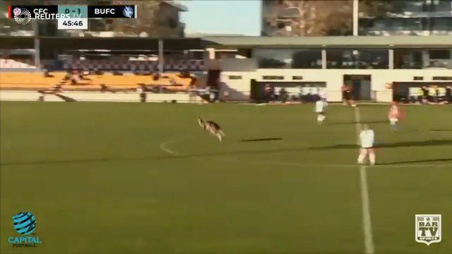 Kangaroo invades Australian soccer game https://t.co/zSyNqCe8Ou via @ReutersTV https://t.co/CnwIZBM0to