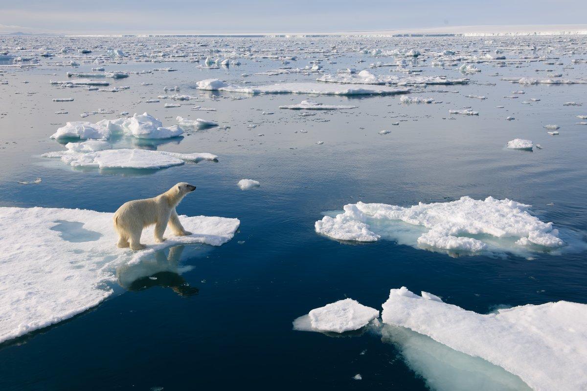 характер тещи-то картинки северного полюса может своем