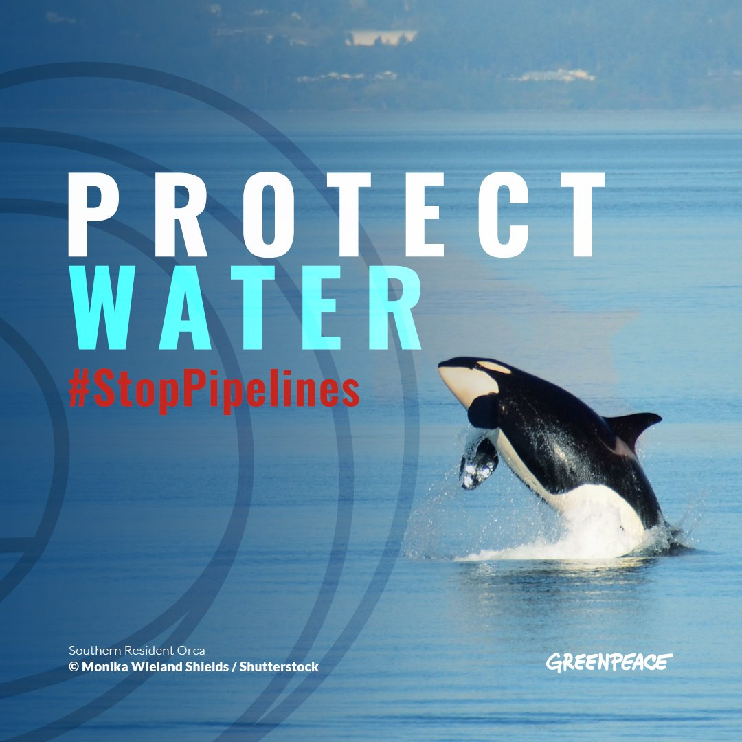 There are now only 75 Southern Resident Orcas left on the planet.  @JustinTrudeau&#39;s new pipeline would bring 400 tankers a year into their habitat and threaten them with extinction. We can&#39;t let that happen &gt;&gt;  https:// act.gp/2lvEK6u  &nbsp;  <br>http://pic.twitter.com/g7voGMWAZo