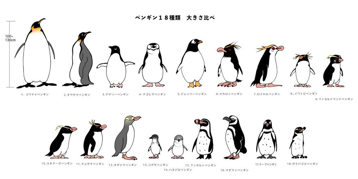 ナカジマナオミ På Twitter おやすみなさい良い夢を ペンギン18