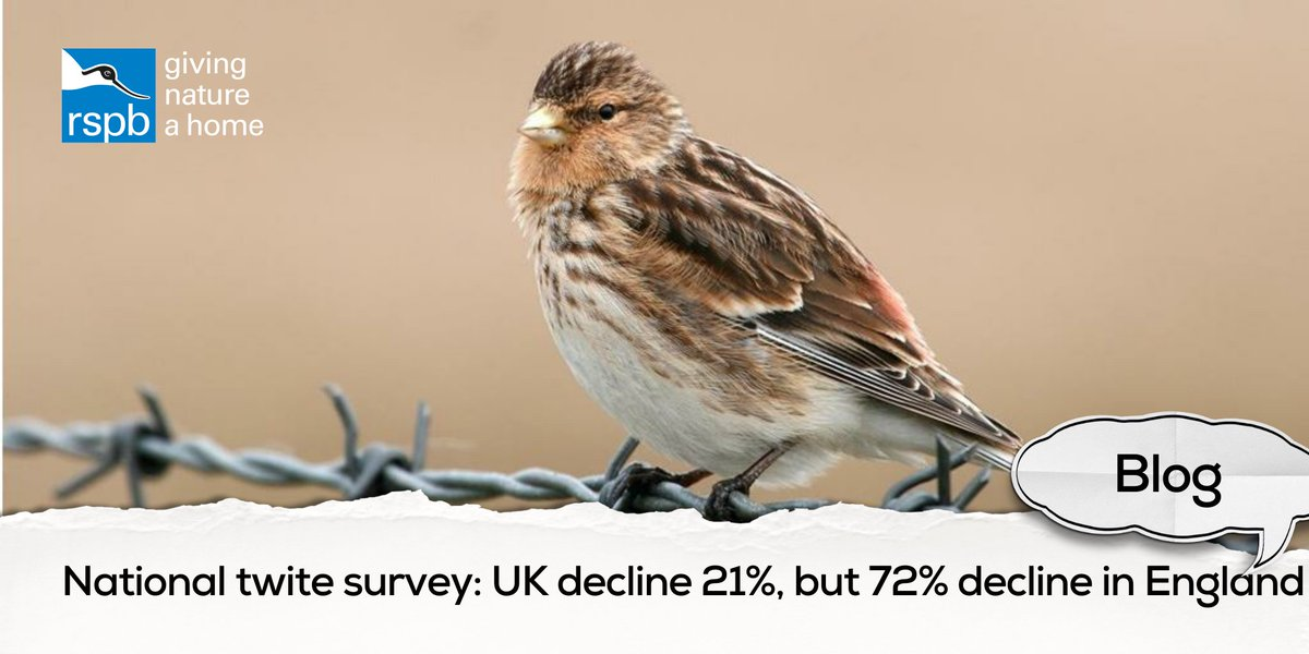 NEW BLOG: With results of the UK twite survey from 2013 out now, Nick Wilkinson discusses the 21% UK decline and the conservation effort that is going in to saving them: bit.ly/2yHlKvi #RSPBScience #ornithology @SNH_Science @tandfbiosci