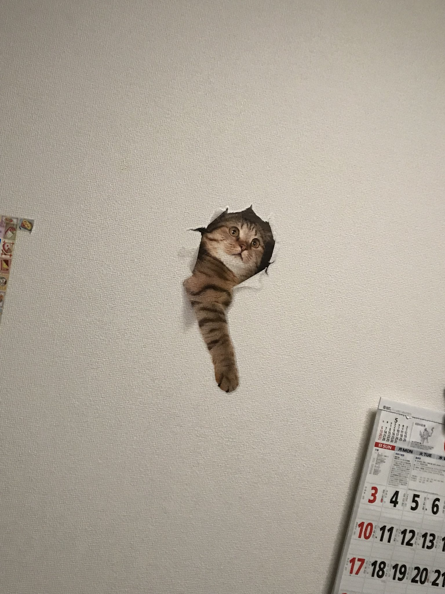これ欲しいw帰宅したら猫が壁を突き破ってお迎えwww