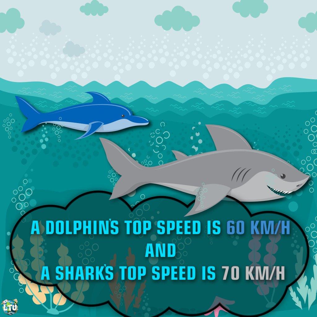dolphin top speed