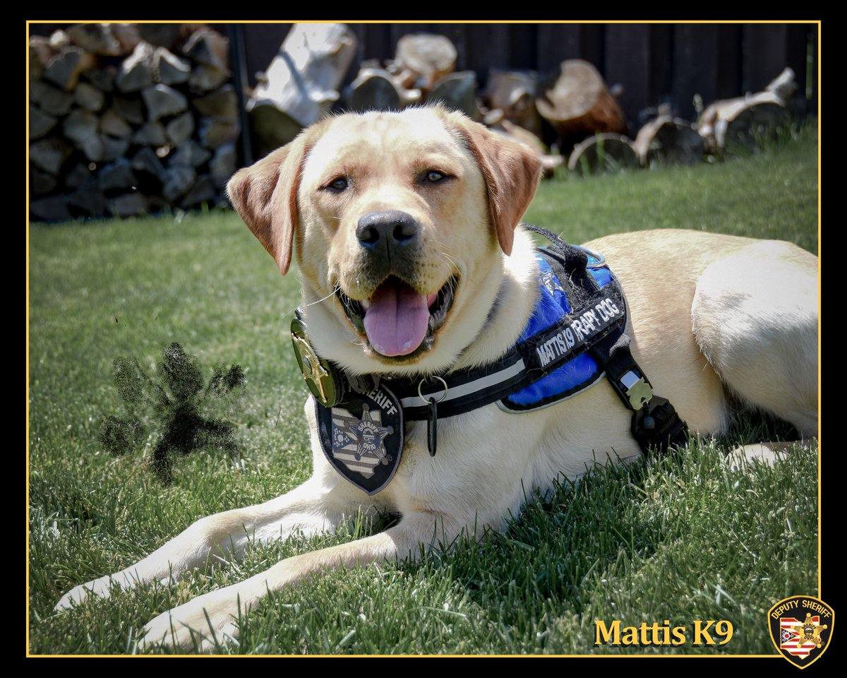 It's time for our #MattisMonday giveaway! We are looking for new followers so please RT and follow! This weeks winners will get a 8x10 autographed picture and poker chip! We will pick 2 new followers and 2 old followers! Leave me a comment! #K9Therapy @OHFCSO<br>http://pic.twitter.com/UaXrsHI4RA
