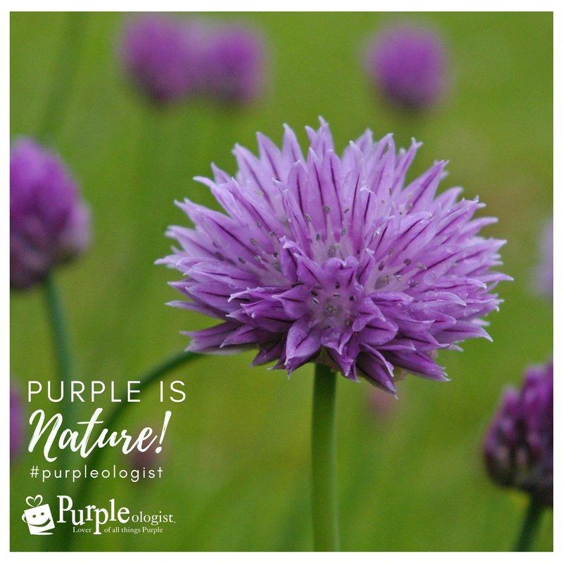 Barbara Mccahill On Twitter Purple Is Nature Purple Purplequote
