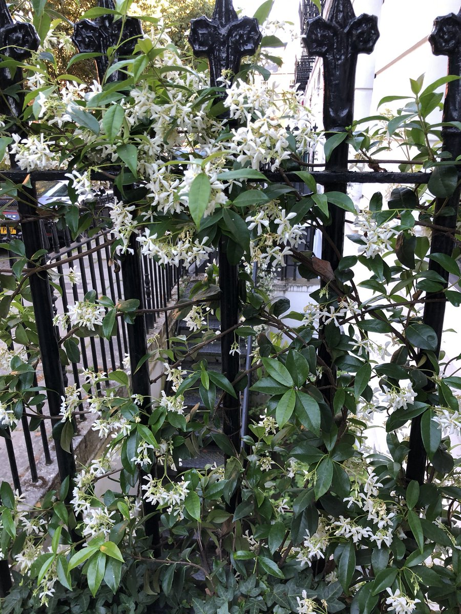 Nigel Slater On Twitter A Tangle Of White Jasmine Either Side Of