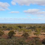 View from the top of LEX's recently identified gold prospect Hang Glider Hill looking south over $LEX tenements,  Lake Lefroy and Gold Fields St Ives gold mine on the horizon ( right of view)