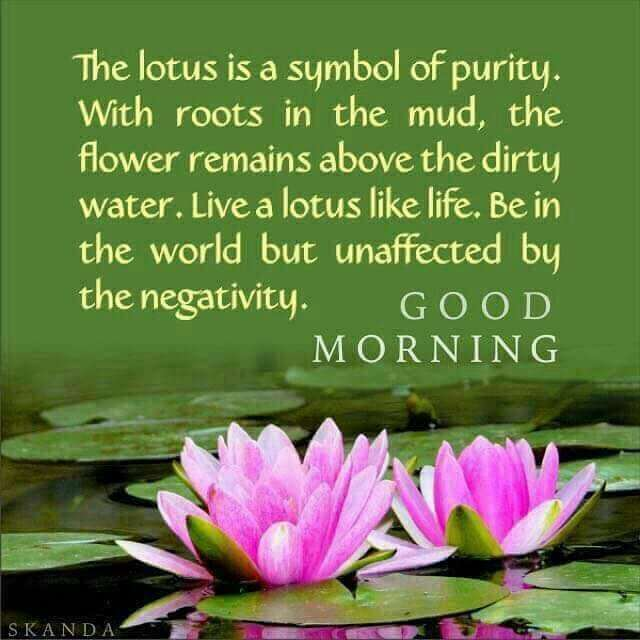 Talk2us Counselors On Twitter Live Like A Lotus Morningquotes