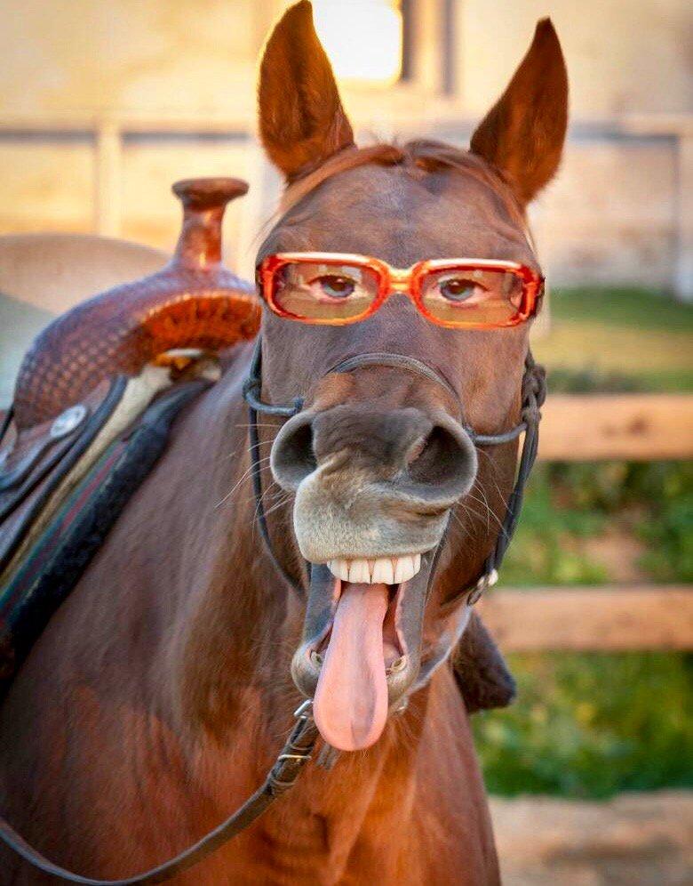 Прикольная картинка лошадь, днем рождения сына