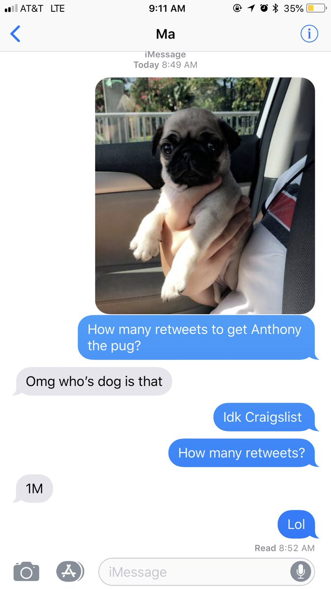 My brother has been begging for a pug for forever. Please twitter, do your thang