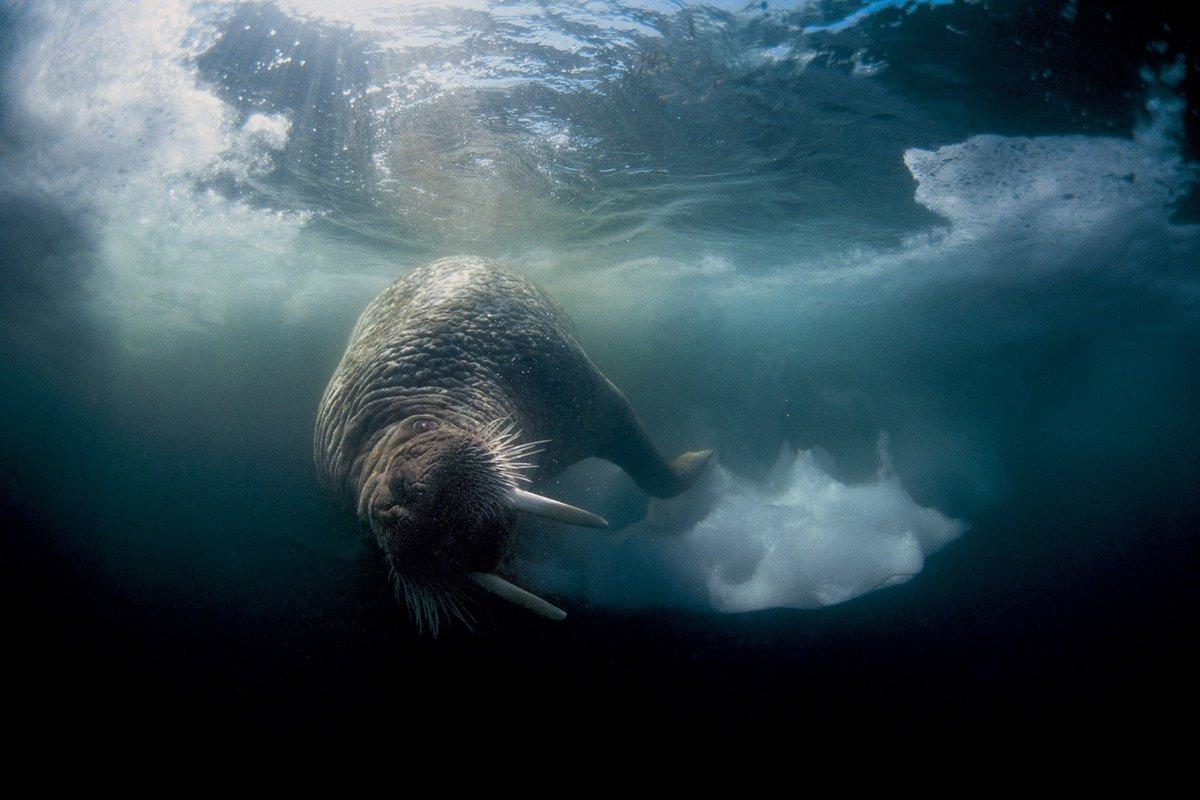 полочках фото ледовитый океан под водой фото высота фасада превышает