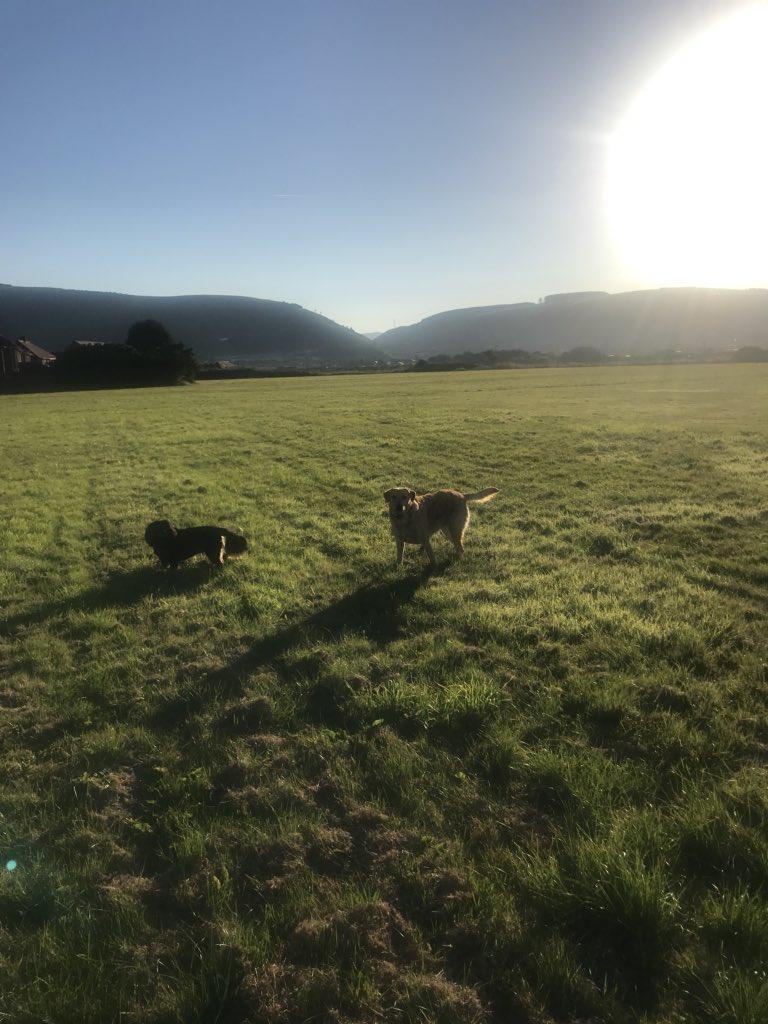 peaceful early morning stroll - HD768×1024