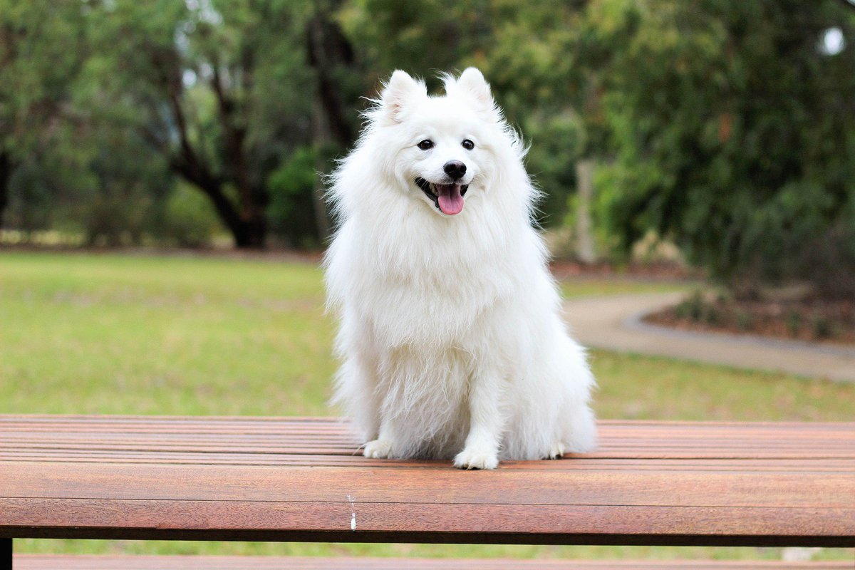 Hd Wallpapers On Twitter Cute White Dog Ultra Hd 8k Wallpaper Https T Co Pg4cekx2hj Cute White Dog Baby Love Puppy Pedigree Doggy Little Pup Young Happy Face Tongue Smile Canine Adorable Desktop Background