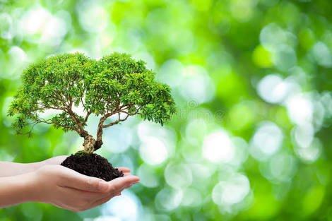 Person holding a bonsai tree