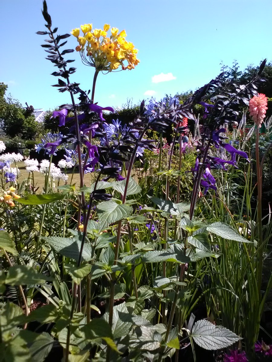 Rare Plant Fair On Twitter More Of