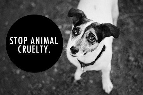 domestic animal abuse essay Animal cruelty essay conclusion i am pretty sure that all these awful crimes towards the animals are committed and haven't been stopped yet because the ordinary people are not well informed about all the cases of animal cruelty.