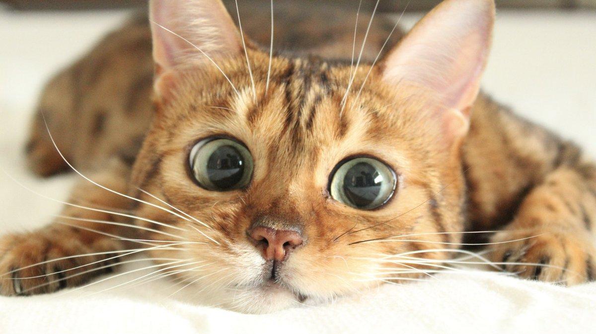 なつこさん、anan に美猫賞 もらったんだよ🎊😆🎊  みんな見てね😽