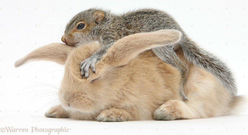 Hoseok As Squirrels 🐿️ on Twitter