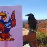 Flat Swagle is busy traveling this summer. From Zion National Park in Utah to the Great Sand Dunes in Colorado to the Grand Canyon in Arizona... he even stopped to pose alongside a raven at Bryce Canyon in Utah! I can't wait to see where else his travels take him!! #swd123 #d123
