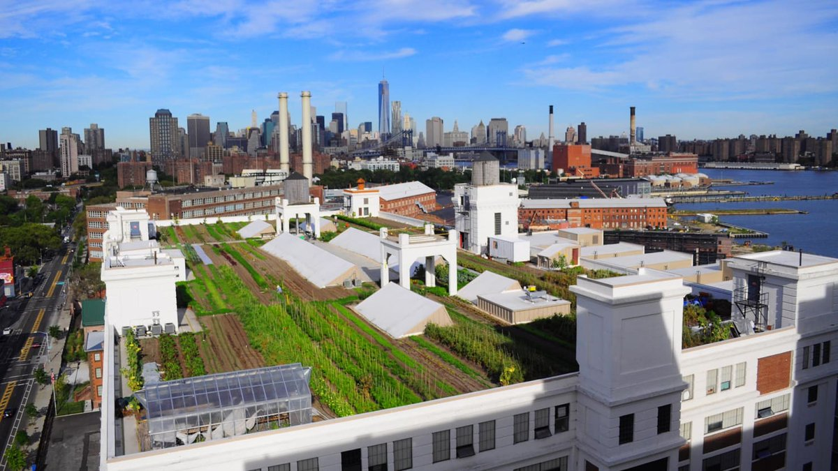 Rooftop Farming Is More Than a Green Thumb's Urban Fantasy #greenroofs #urbanag https://t.co/jOiB2o7bnA