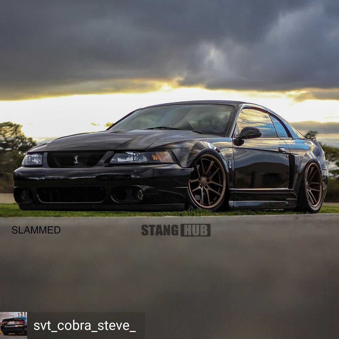 Twitter Mustang ztbh1ygufq